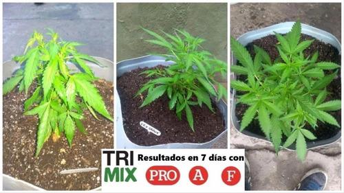 trimix treemix n 500ml - booster vegetativo + regalo!
