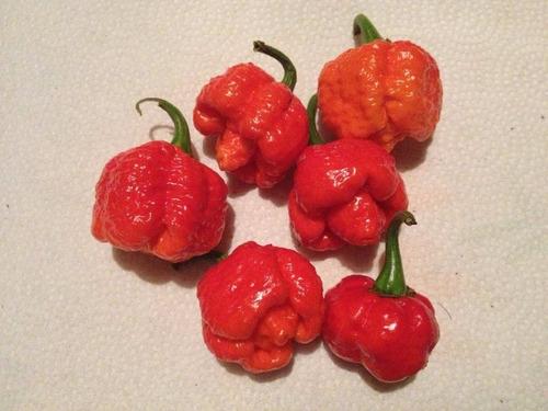 trinidad moruga scorpion rojo semillas chile mas picoso
