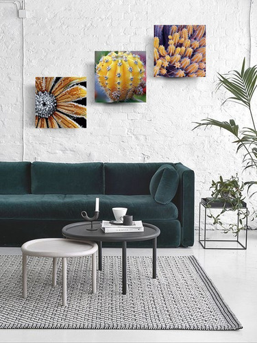 tríptico plantas cactus cuadros decorativos canvas varios mo