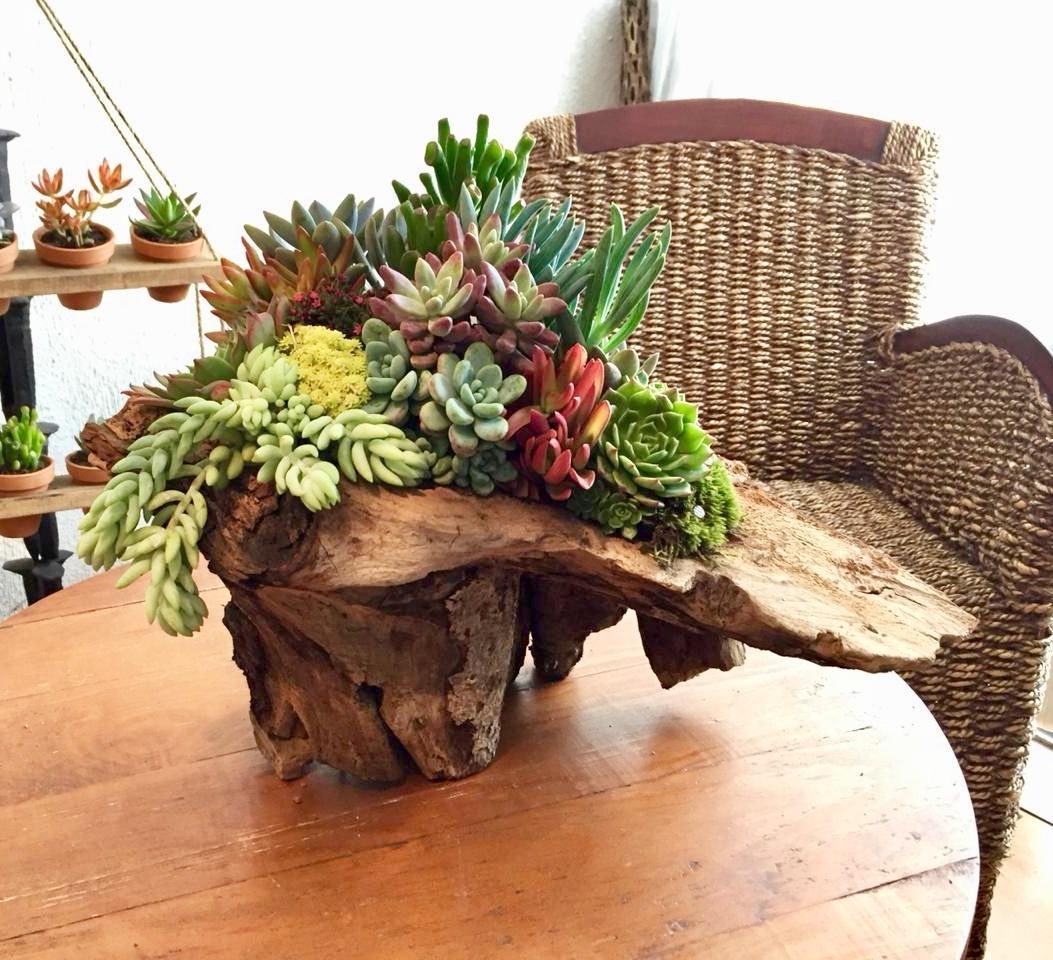 Tronco Con Suculentas Arreglo Floral Centros De Mesa Decoración Mediano 145000