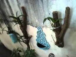tronco para orquideas 10 20 30 ate 60 cm