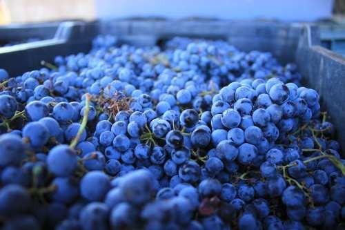trv se vende terreno en la ruta del vino, en san antonio de la minas, ensenada b.c.