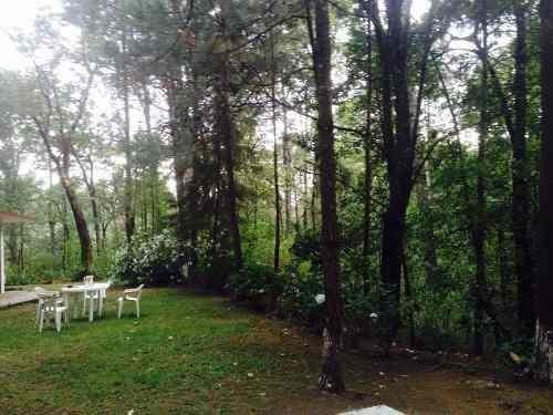 tu propio bosque con cabañita de descanso