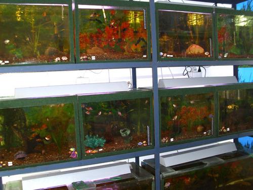 tubos de luz importados resaltan el color de los peces