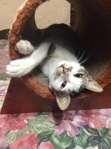 túnel rascador para gatos