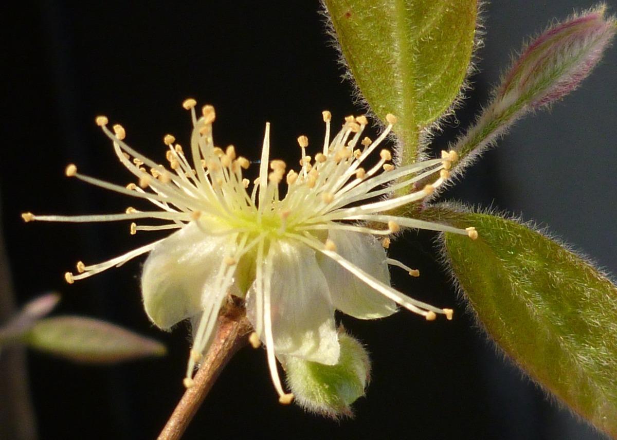 Plantin seed 3
