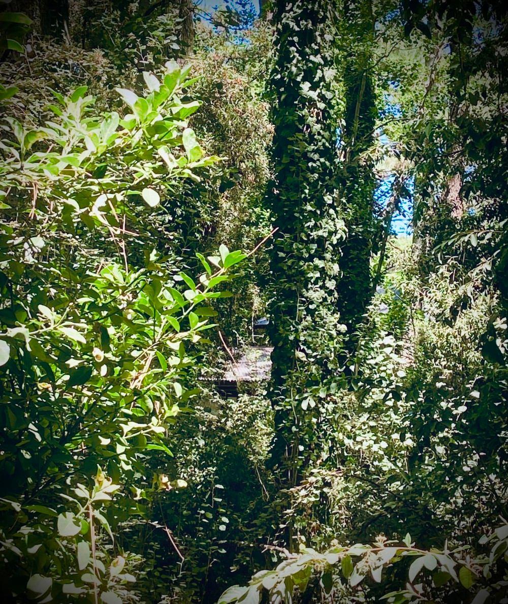 ultimo terreno en carilo zona bosque viejo dueño directo