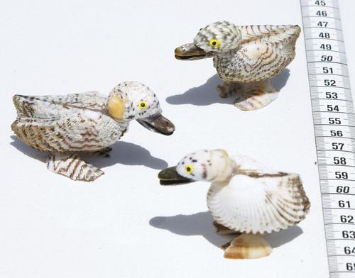 un pato hecho de las conchas naturales, desde bahamas