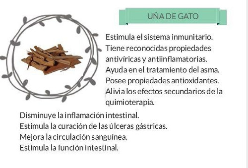 uña de gato (uncaria tomentosa) en estado natural