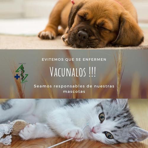 urgencia, asistencia veterinaria a domicilio (asistvet)