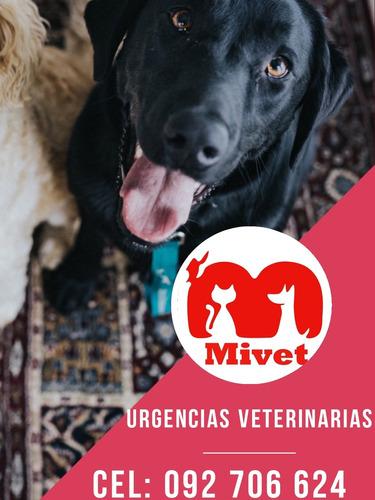 urgencia veterinaria-a domicilios -cirugias montevideo