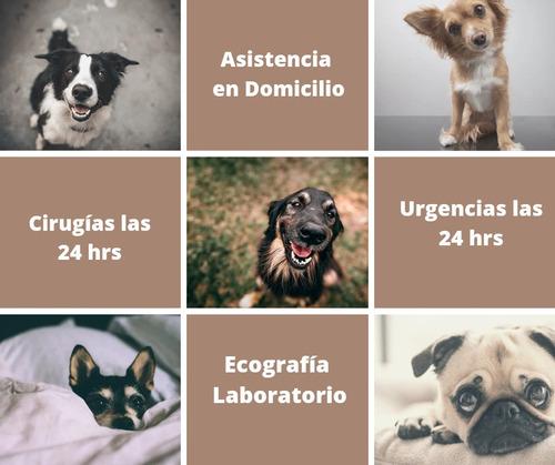 urgencia veterinaria-domicilios-cirugias montevideo