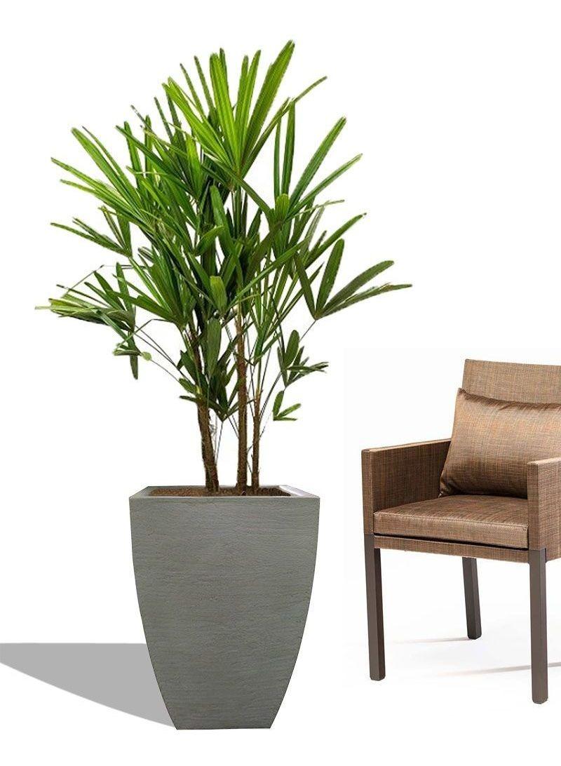 Vaso Leve De Plantar Medio 60x40
