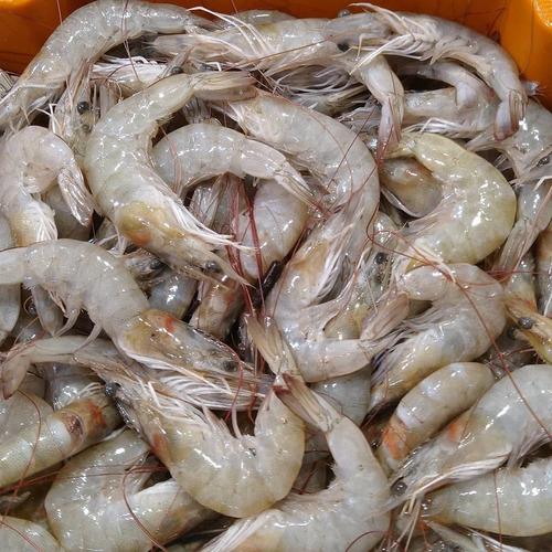 venda de mariscos e frutos do mar