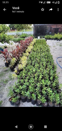 venda de planta ornamental