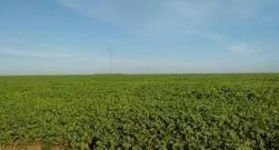 venda fazenda fazenda