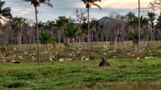 venda fazenda iracema  roraima