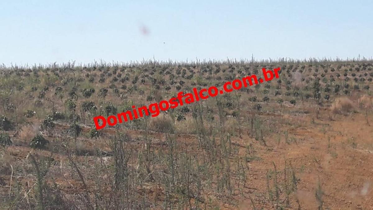 venda - fazenda - zona rural - araxá - mg - d0201