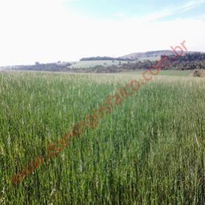 venda - fazenda - zona rural - taquarituba - sp - d8100