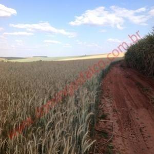 venda - fazenda - zona rural - taquarituba - sp - d8101