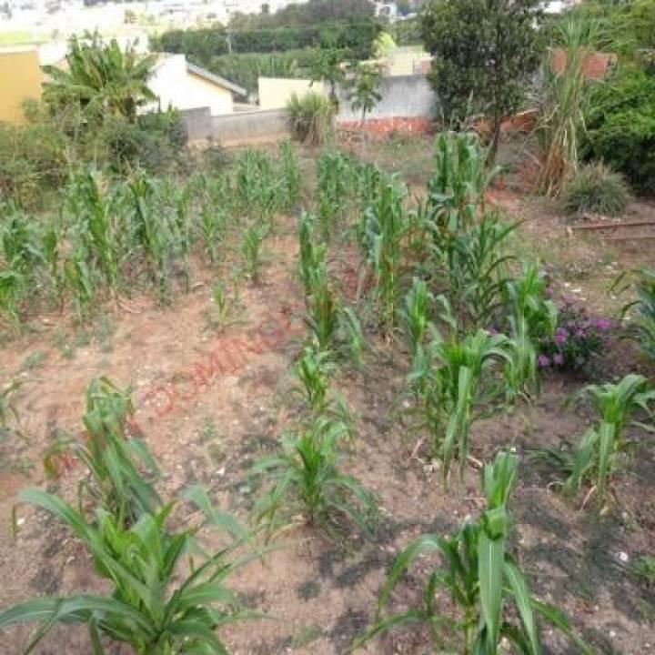 venda - terreno - jardim bela vista - americana - sp - d4713