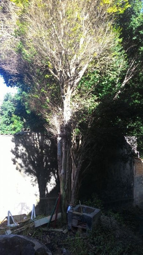 venda terreno são paulo jardim regina - t072