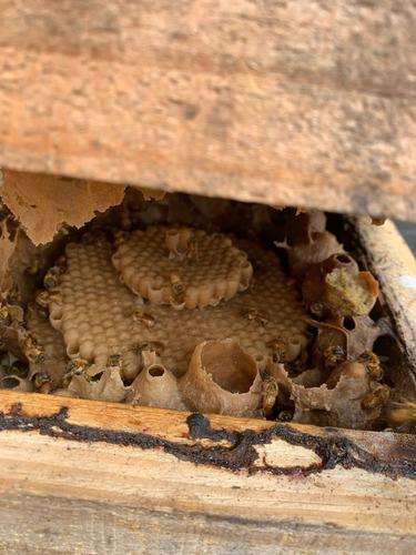 vendas de abelhas sem ferrão e mel de jataí