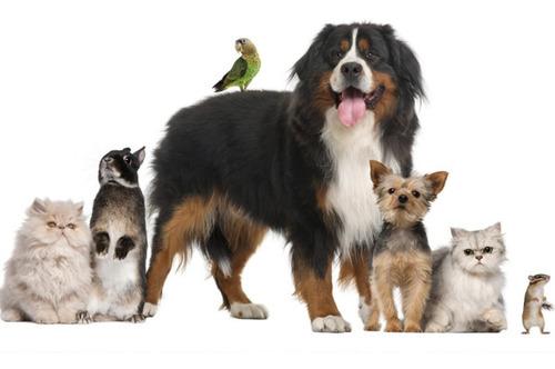 vendas  de animais