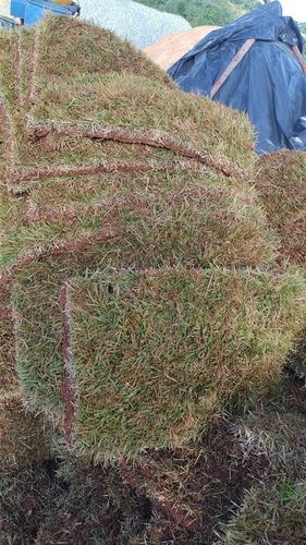 vendas e plantio de grama