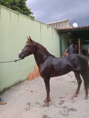 vende cavalo mangalarga machado