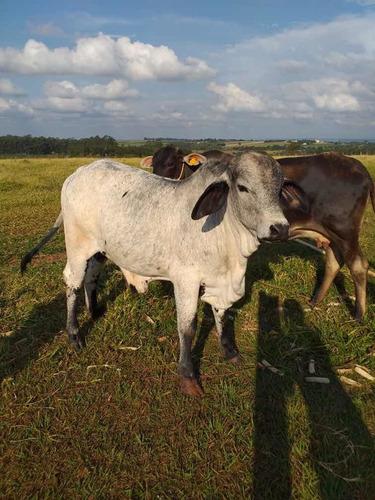 vende-se gado