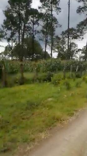 vende terreno habilitado p/huerta aguacate jalisco 600ha
