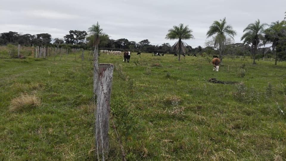 vendo 10 hectáreas zona colpa caranda eco resort