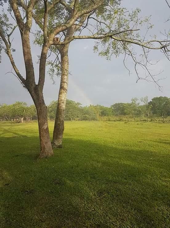 vendo 14 hectareas en pirayu. cod 2563