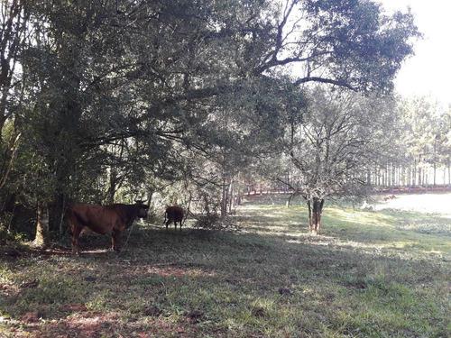 vendo 25 hectáreas de campo en cerro cora - misiones