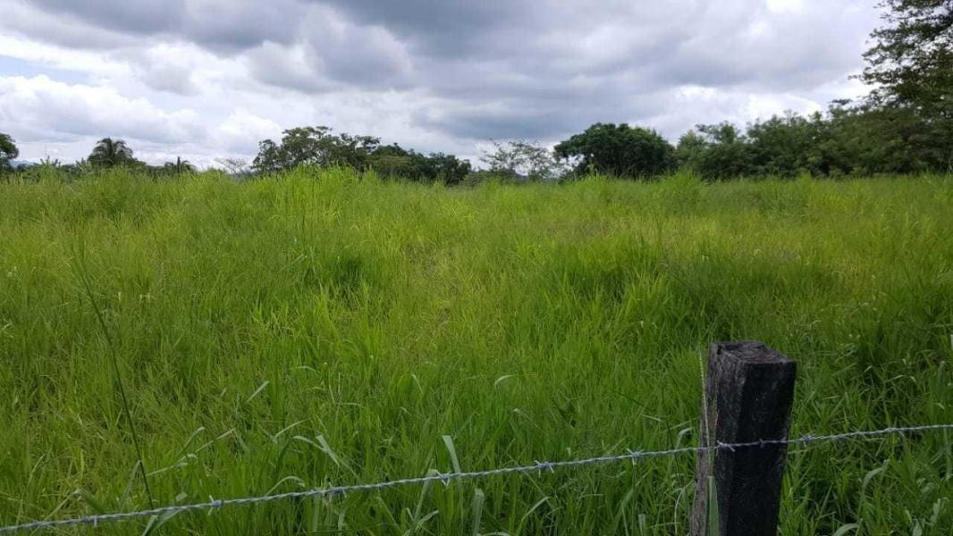 vendo 26.5 hectáreas de terreno en penonomé 19-2694**gg**