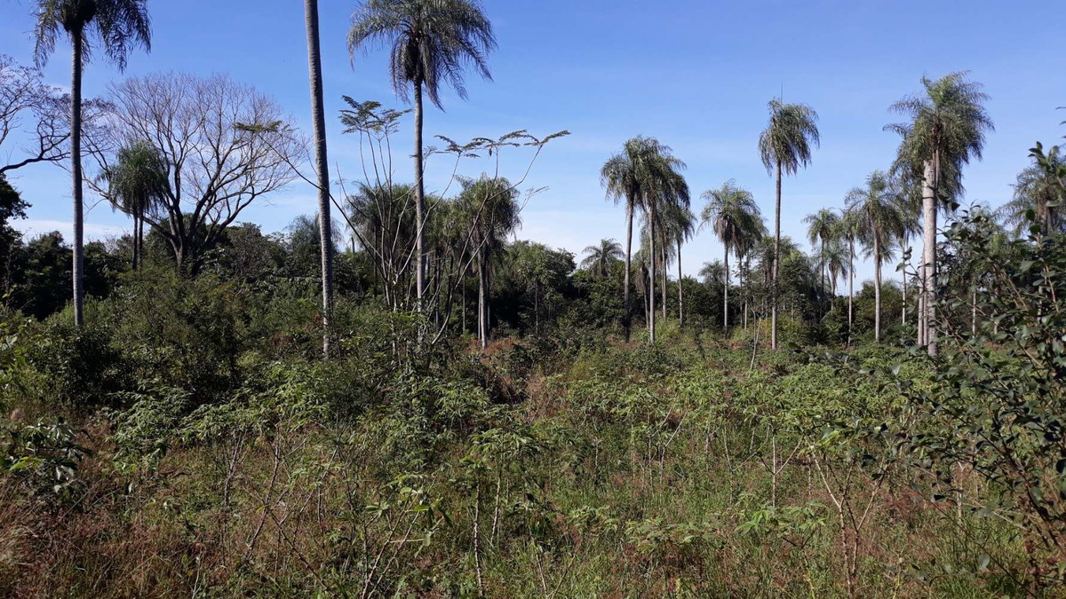 vendo 6 hectáreas con casa-quinta en eusebio ayala