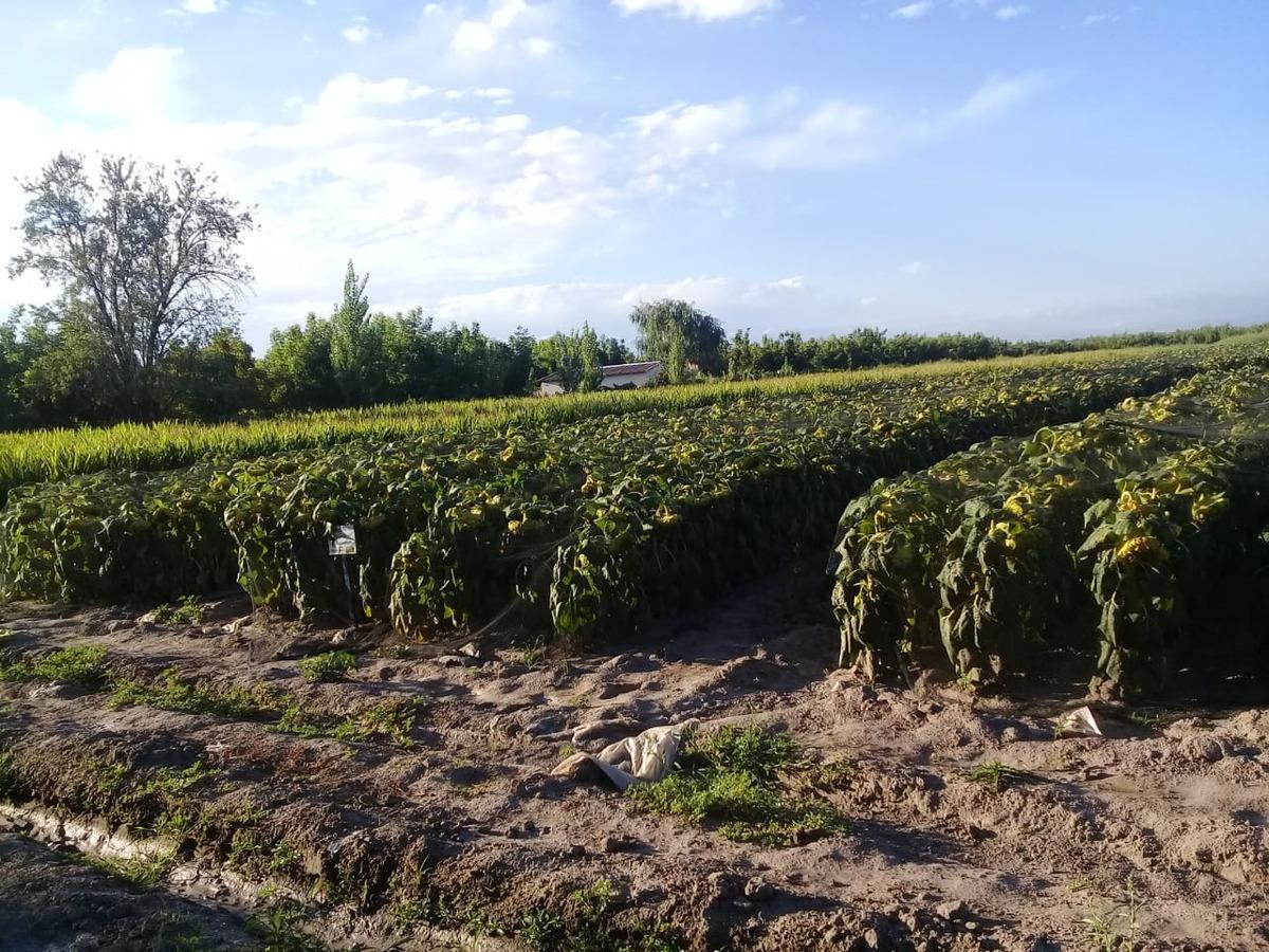 vendo 6 hectáreas (tunuyan. mza)