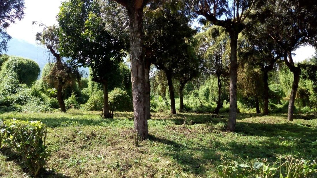 vendo belleza de terreno (7.3 manzanas), topografía plano