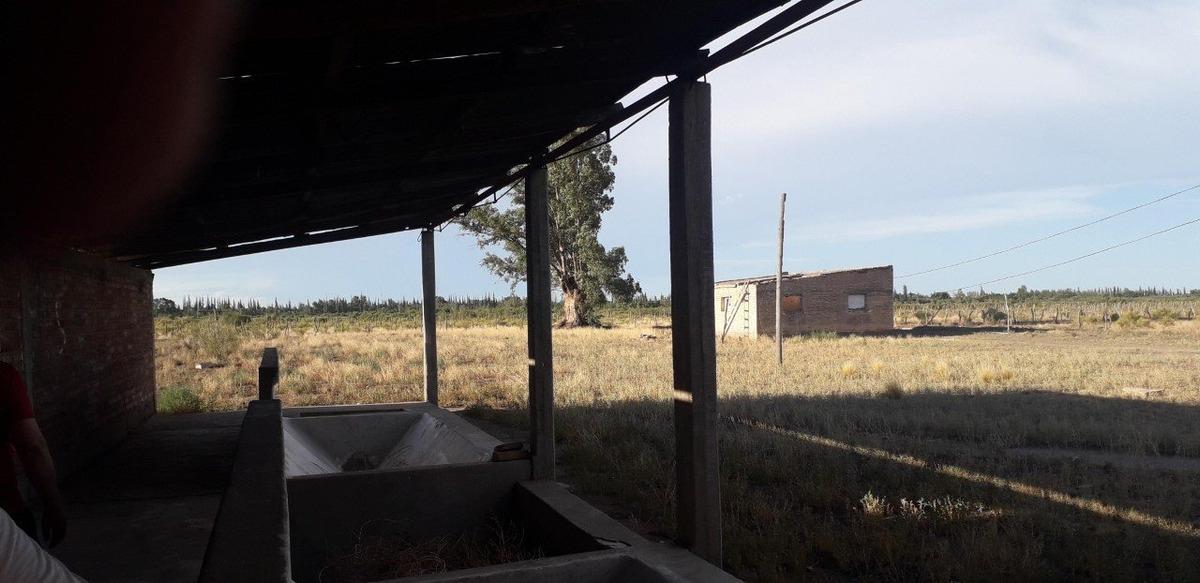 vendo bodega con 18 hectareas en la llave en san rafael mendoza