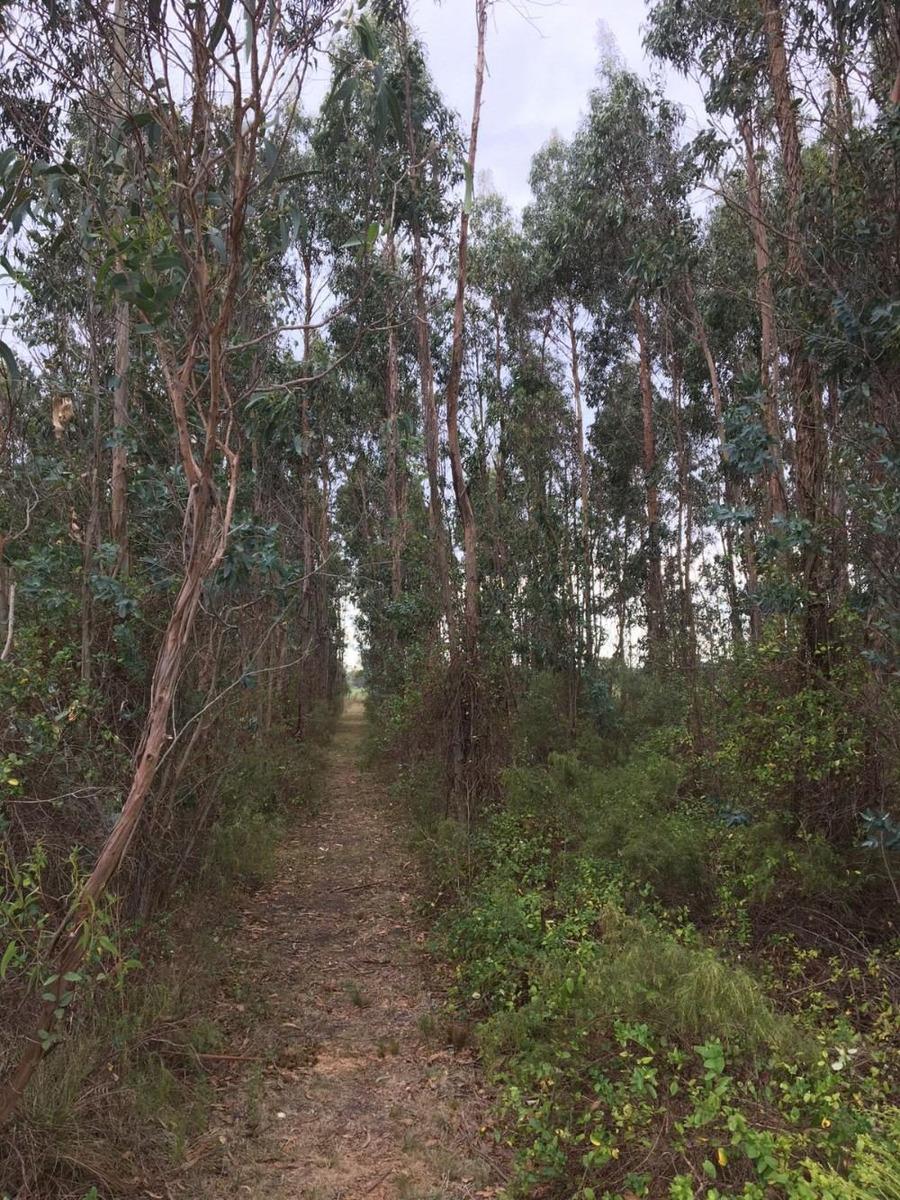 vendo campo 38 hectáreas con monte