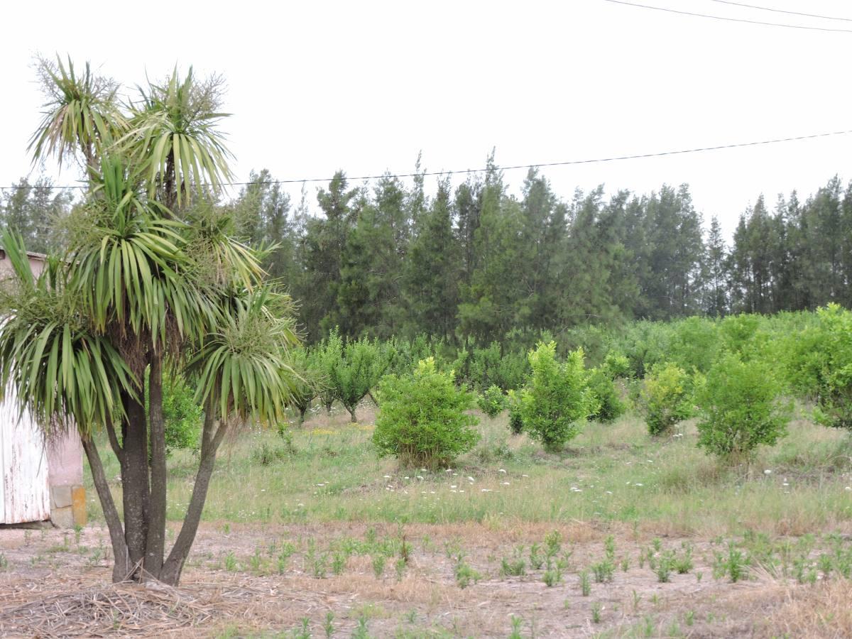 vendo campo 50 hectáreas en juanicó inmobiliaria harretche