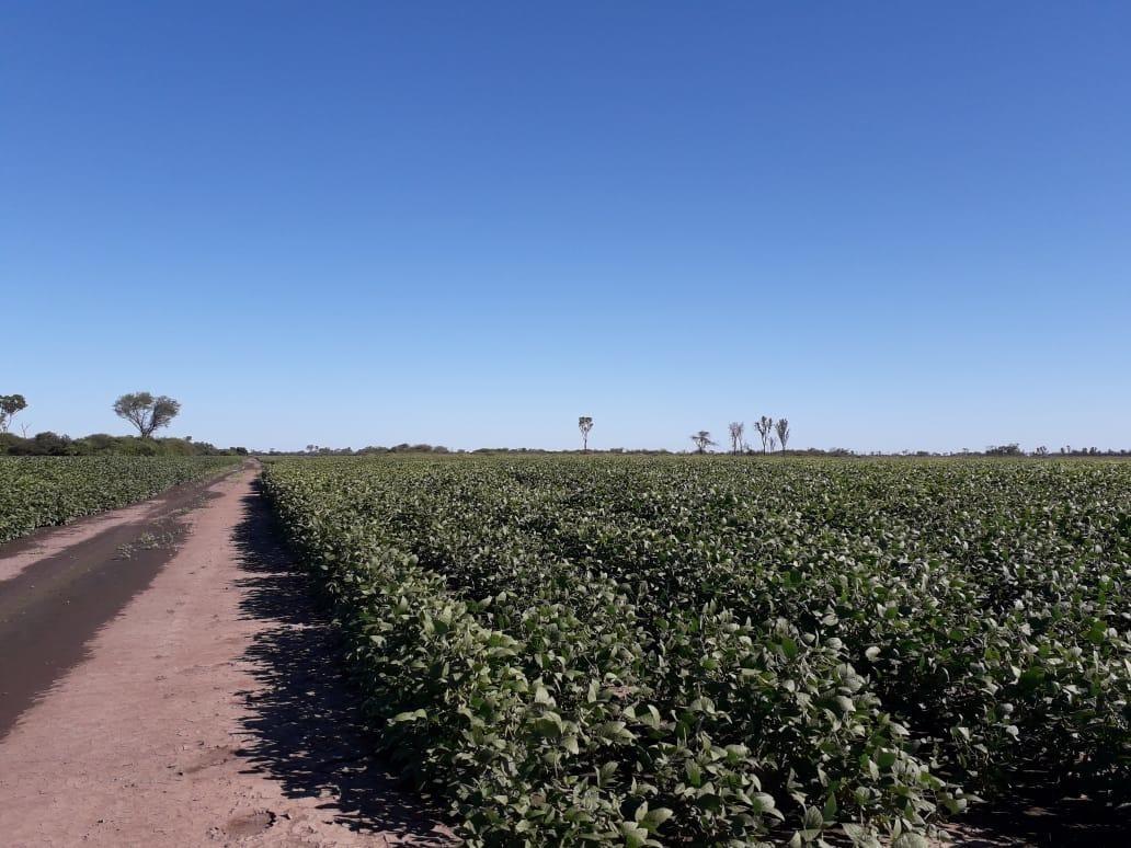 vendo campo agricola ( palo santo. formosa )