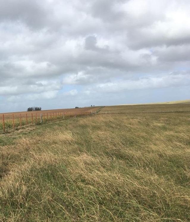 vendo campo en rocha 49 hectareas
