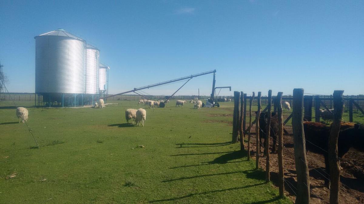 vendo campo ganadero 389 hectáreas ( arata la pampa )
