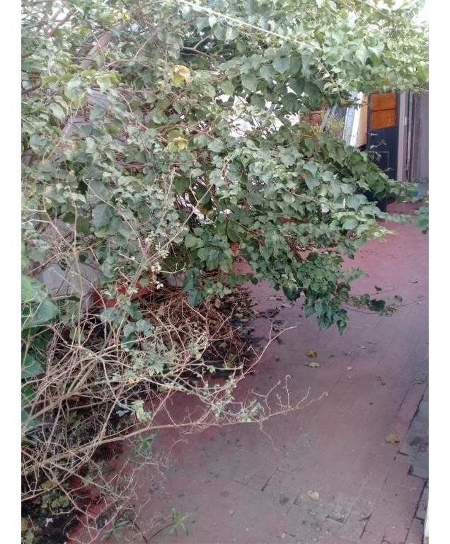 vendo casa de 5 ambientes ramos mejía