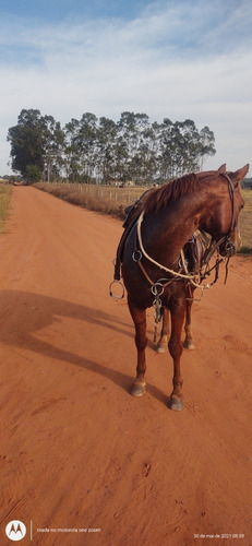 vendo cavalo meio sangue quarto de milha com mangalarga