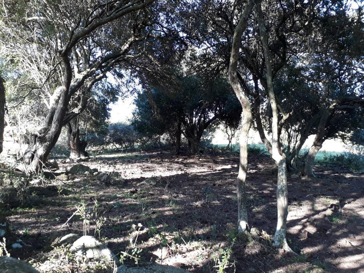 vendo chacras de 5 hectáreas  financiadas