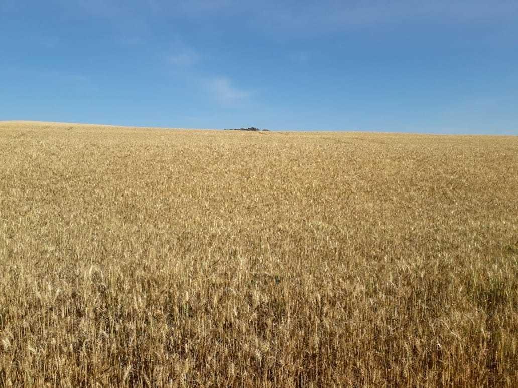 vendo fazenda cultura  soja em cornélio procópio-pr (6068)