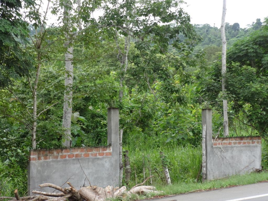 vendo finca 57 ha teca y bosque - 3km a same/ casablanca